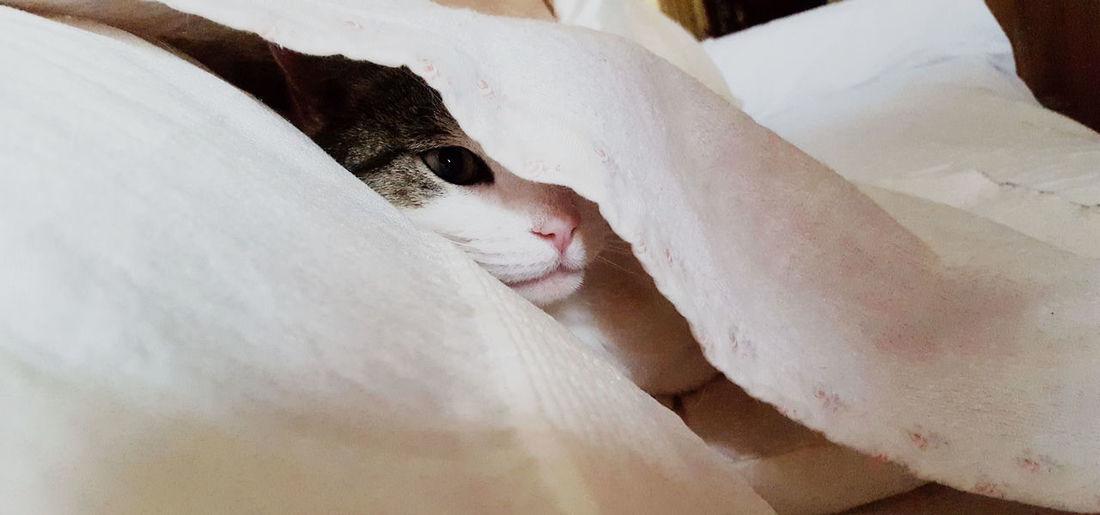 #MollyTheWelshCat Animal Themes Cat Close-up Domestic Animals Eye Furry Mammal Pets Sneeky The Portraitist - 2017 EyeEm Awards BYOPaper! Pet Portraits Be. Ready. Visual Creativity