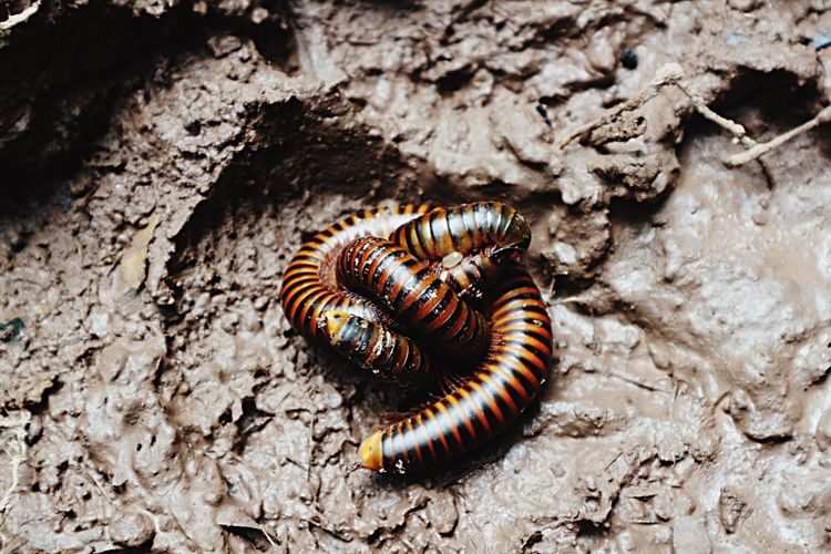 Insect Animal Themes Animals In The Wild One Animal Animal Wildlife No People Close-up Nature Gear Day Outdoors