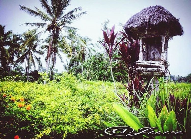 Bali, Indonesia Balinese Bali Photography Easy Risefield Traditional
