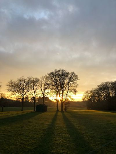 Golf Course Golf Greens Cricket! Cricket Field Sunset Sky Plant Tree Cloud - Sky Beauty In Nature Sunset Nature Field Grass Land Tranquility Growth Scenics - Nature Tranquil Scene No People Outdoors Landscape Idyllic Environment Orange Color