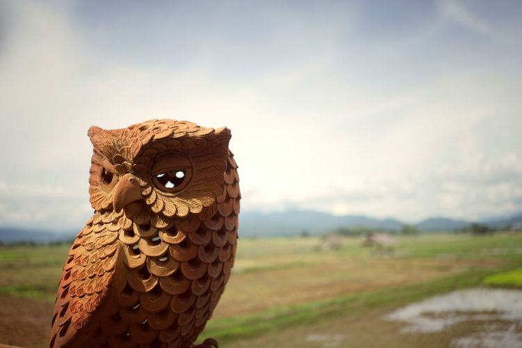 Owl Statue My Year My View Portrait Close-up Sky Day Outdoors Agriculture Nature Doll Statue Decoration Owl Lost In The Landscape