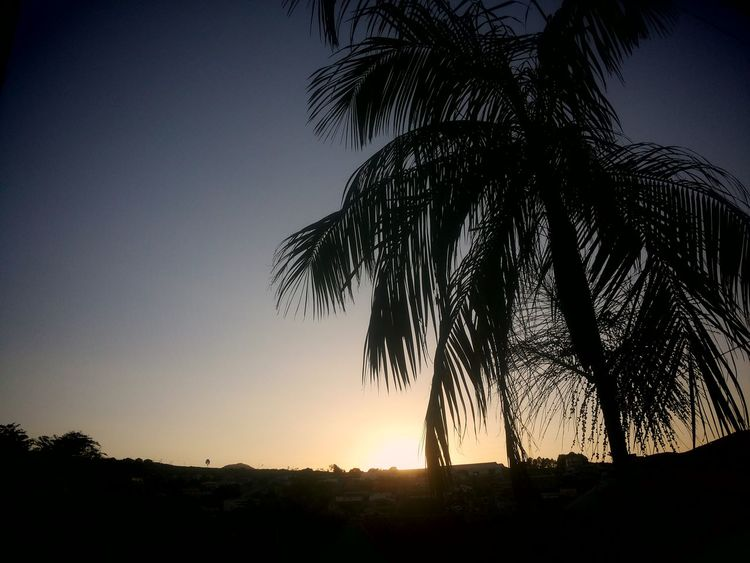 Beauty In Nature Brazil Collection Photo EyeE Clear Sky Growth Nature No People Outdoors Palm Tree Scenics Silhouette Sky Sun Sunlight Sunrise_Collection Sunset Tranquil Scene Tranquility Tree