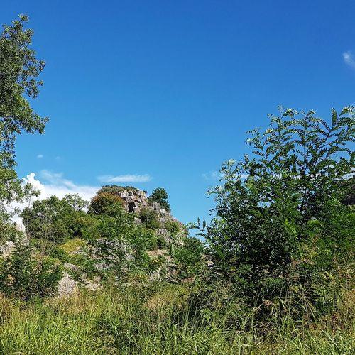 I'm alten Steinbruch Steinbruch Vrsar Croatia Hrvatska Tree Water Blue Branch Forest Sky Close-up Plant Green Color Treetop Idyllic