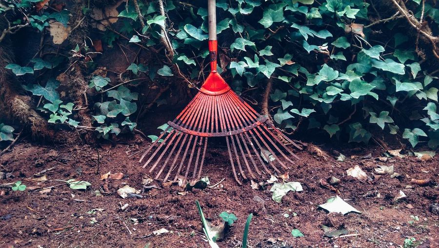 Rake On Ground Against Leaves