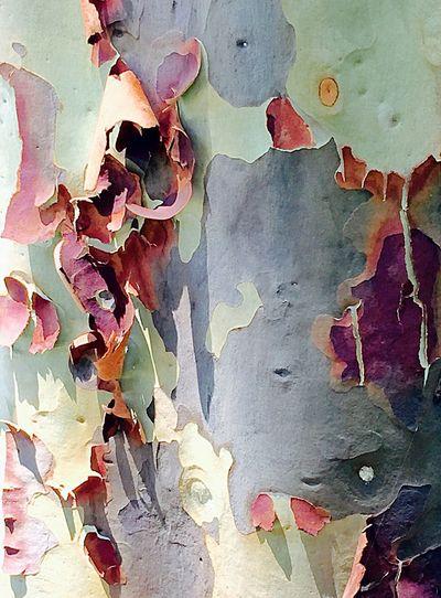 Shedding Layers: Tree Bark Abstract Tree Tree_collection  Nature_collection Tree Bark Bark Texture Bark Texture Background Tree Abstract Abstract Nature Nature Nature Photography Tree Trunk Tree Closeup Shedding Layers Nature Layers Paper Tree TreePorn