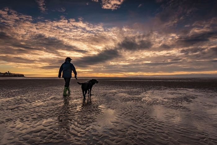 Sand Silhouettes Norfolk Hunstanton Sunset Dog Beach Sand Pets Domestic Animals Walking Sky Sea Nature Beauty In Nature Silhouette Cloud - Sky Mammal One Animal Scenics Full Length Clouds And Sky Beach Day Beach And Sky Seaside Walk Mans Best Friend