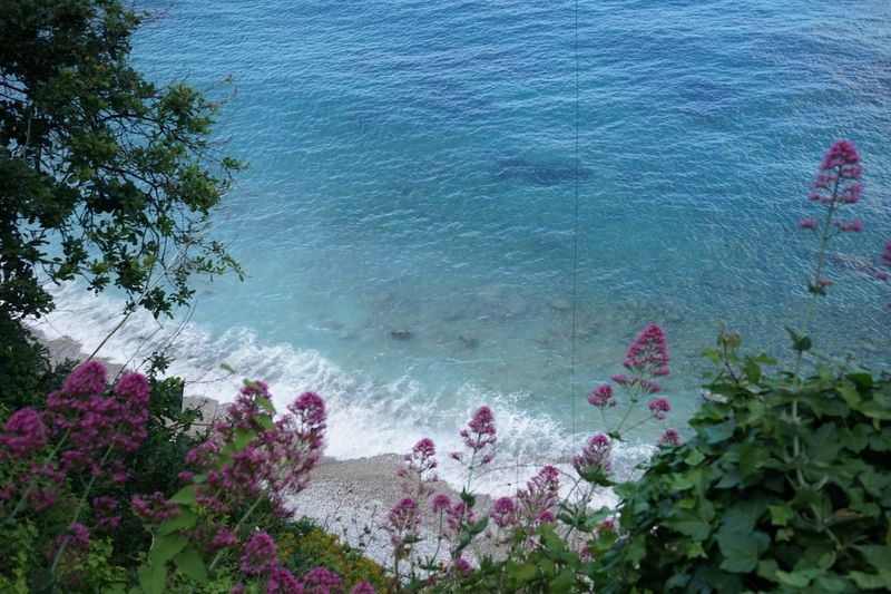 High angle view of pink flowering plants by sea