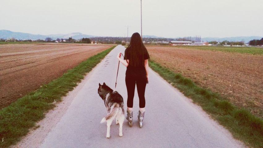 Husky Siberian Husky Road The Path Less Traveled By Pointer Footwear
