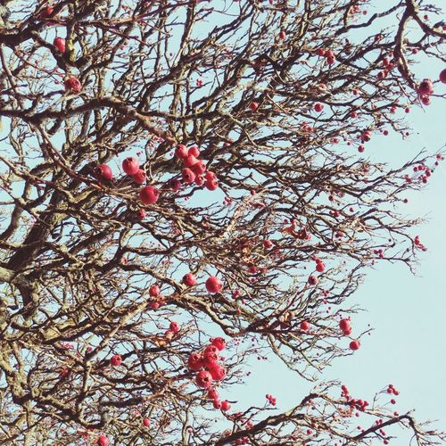 Tree with red
