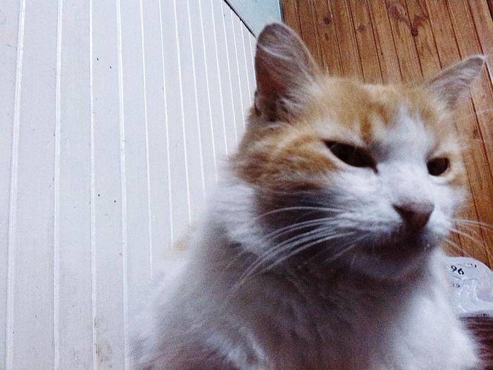 Hello World Love♥ Cat♡ Homero Homersimpson Homer Tuu Mama No Meee Quiere, Dice Que Soy Un Vago, Dice Que Soy Un Peldo Y Un Barbjan O/ I Love My Cat ❤