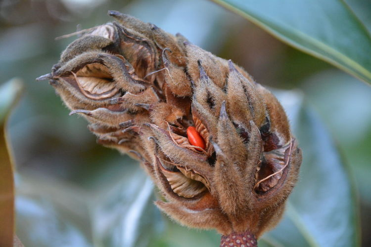 Close-up of plant pod