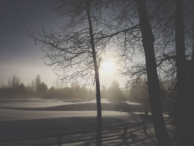 Winter silhuettes Winter Wonderland ❄ Tranquil Scene Bare Tree Cold Temperature Winter Beauty In Nature Scenics Snow Sunbeam Fog Frosty Mornings Mysterious Morning Light Snowlandscapes Sunrise Silhouette Tranquility Mysterious Mist Golfcourse Rising Sun Weather Cold Freshness Haze Non-urban Scene Silhuettes