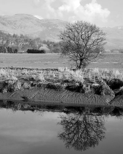 The Edge of The Highlands Tree Reflection Plant Water Tranquility Scenics - Nature Beauty In Nature Landscape Tranquil Scene Bare Tree Blackandwhite Black And White Scotland