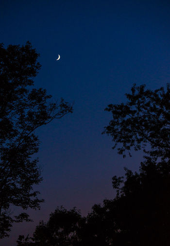 Astronomy Beauty In Nature Blue Branch Clear Sky Crescent Dusk Half Moon Low Angle View Moon Nature Night No People Outdoors Scenics Silhouette Sky Tranquil Scene Tranquility Tree