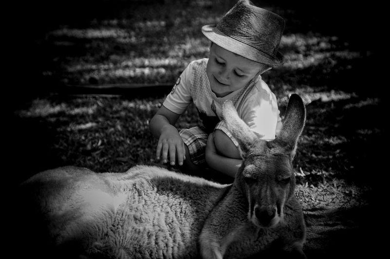 Cute boy touching kangaroo on field