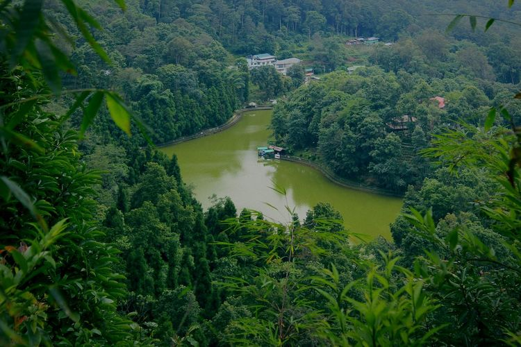 Tree Nature High Angle View Forest Outdoors Beauty In Nature Growth Water No People Plant Day Sky Scenics Laketopview Green Color Leaf Reflection Lake Tourism Travel