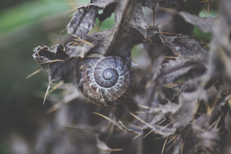 Close-Up Of Snail On Dried Plant