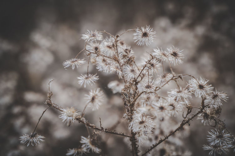 Plant Growth Beauty In Nature Selective Focus No People Day Nature Tranquility Outdoors Sunset Sunlight Sunset_collection Grass Grassland Grass Area Nature Nature_collection Nature Photography Peaceful Peaceful Place Peaceful Moment Peaceful Evening Gentle