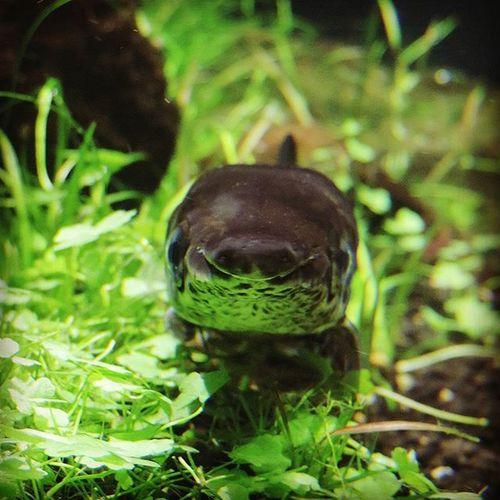 [2015.09.26] Happy garfish wants you to smile~ 😊 Seaaquarium Sentosa Singapore Sg Garfish Livingfossil Happyfish Smile