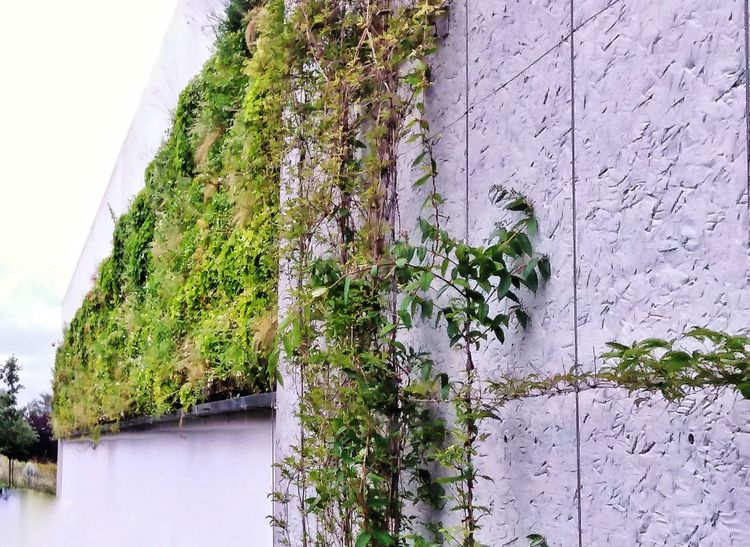 Wall City Plant Greenwall France Lille Urban Sky Outdoors Architecture EyeEmNewHere
