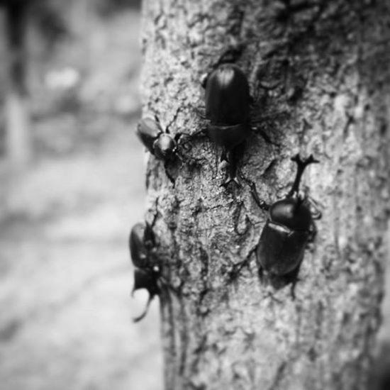 カブトムシ クワガタ カブトムシ クワガタ 昆虫 むつみ昆虫王国
