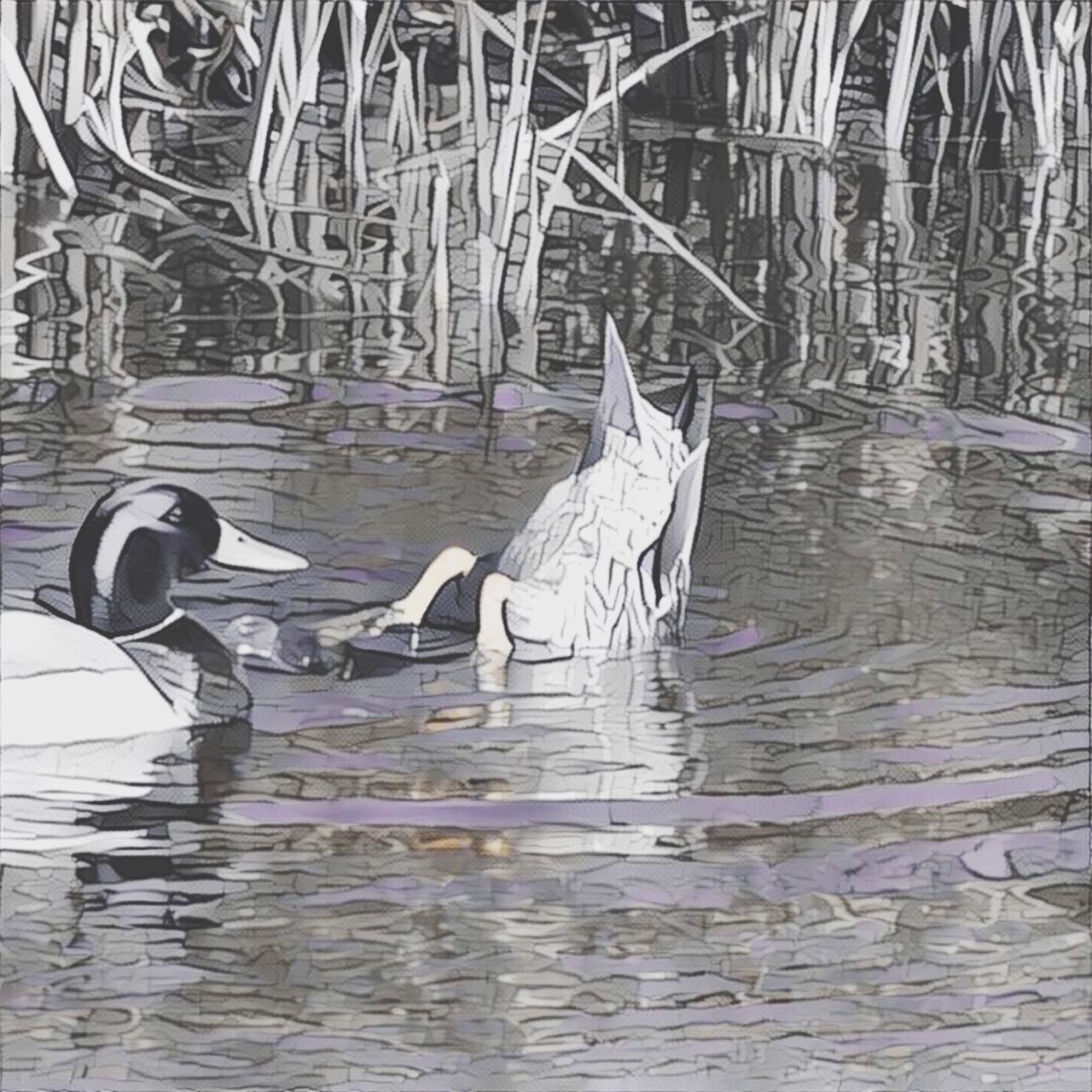 bird, animal themes, no people, animals in the wild, day, water, outdoors, nature, close-up, swan