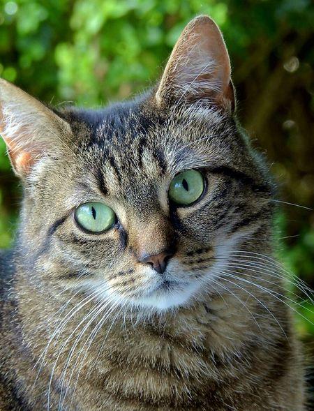 Cat Taking Pictures Taking Photos Housecat Annie Backyard Pet Portraits