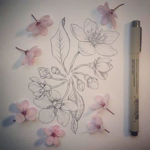 New work :3 Test Archivalink Micron Pigmamicron Flowers Jazmin  Sketch