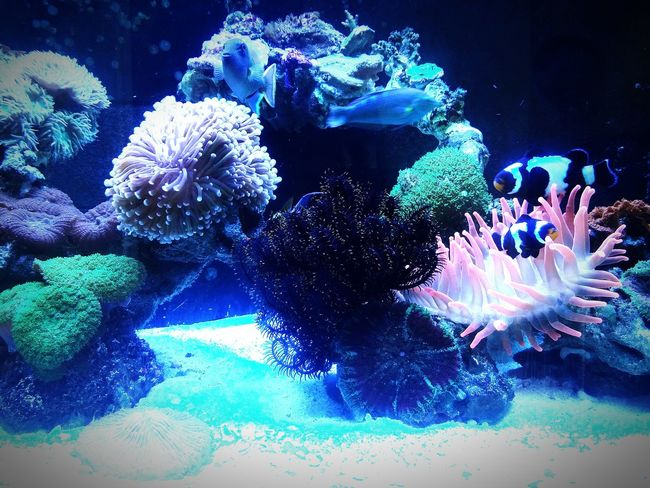 By Lg G3 Sea World Fishtank Coral Reefs Seafish Animal Photography Animal Lover Nature Lover