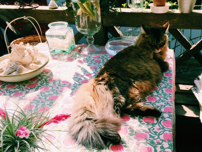 High Angle View Of Cat Lying On Table