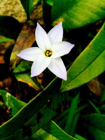 White Flower White Flowers Spring Flowers White Face Nature