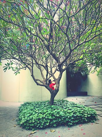 Beside Trees Somewhere Around The World A Breath Of Fresh Air :-) In Love SG