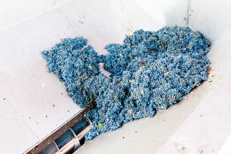 High angle view of red grapes in machinery at factory