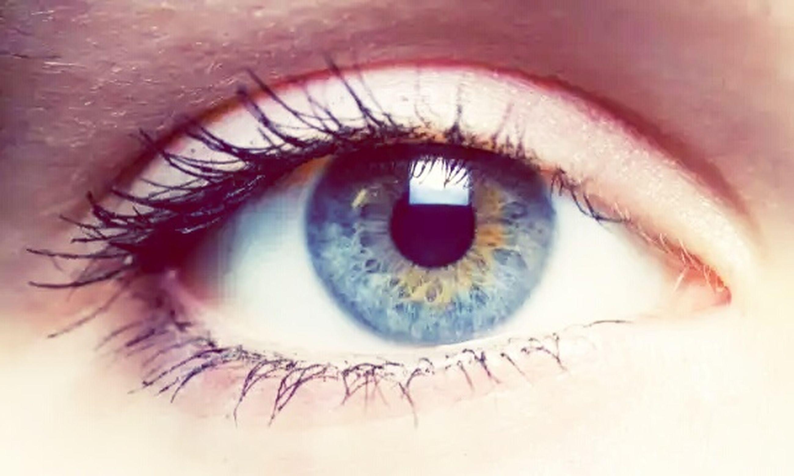 human eye, eyelash, eyesight, sensory perception, close-up, portrait, eyeball, looking at camera, extreme close-up, iris - eye, eyebrow, part of, human skin, extreme close up, vision, human face, unrecognizable person