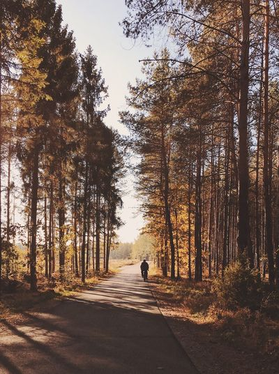 Autumn colors Autumn Tree Plant Nature Sunlight Sky Real People Transportation Men Road Outdoors Beauty In Nature Tranquil Scene Lifestyles