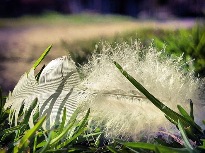 Close-up of feather on field
