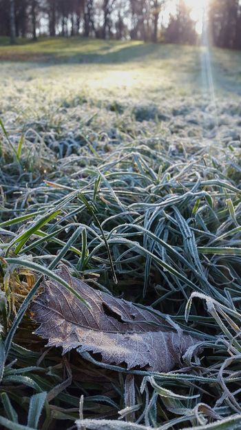 Морозным утром в лесу Nature No People Day Grass Forest Beauty In Nature Leaves Foliage Leaf Frost Ho Hoar Hoarfrost On The Tree Hoar Frost
