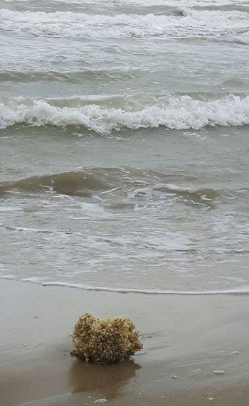Wellen Im Wasser