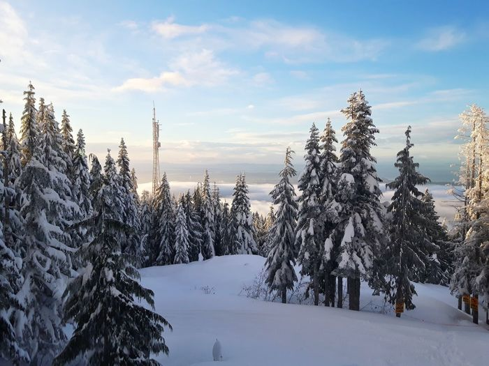 Winter Snow Cold Temperature Sky Nature Weather Tree Landscape Beauty In Nature Mountain Scenics