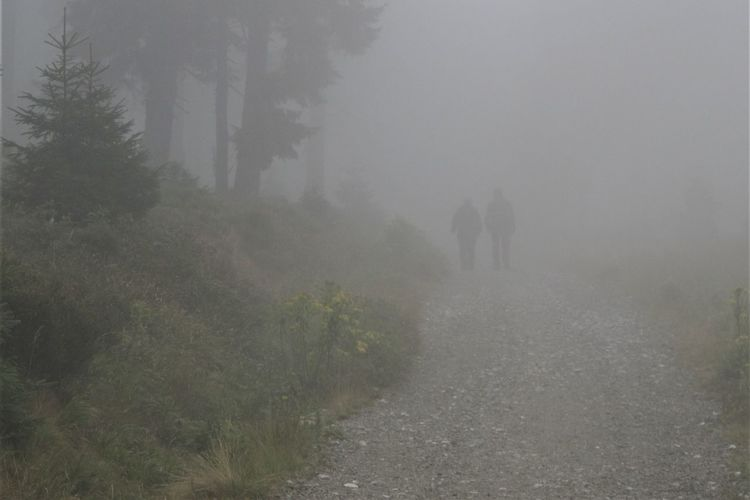Path Day Fog Forest Hazy  Land Mist Nature Outdoors Plant Real People Rear View Road Trail Tree Walking