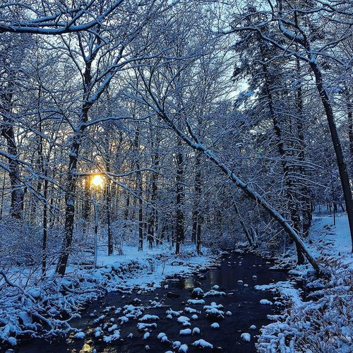 A morning sunrise run Dawn Sunrise Running Trail Running Snow Winter Cold Temperature Nature Tree Bare Tree Forest Tranquility No People Beauty In Nature Outdoors Frozen