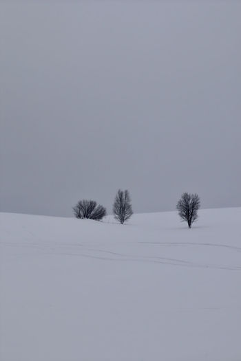 Snow Cold Temperature Winter Tranquility Beauty In Nature Field Land Covering Plant Tranquil Scene Scenics - Nature No People Nature Tree Environment Landscape Sky White Color Day Extreme Weather Snowing Minimalism