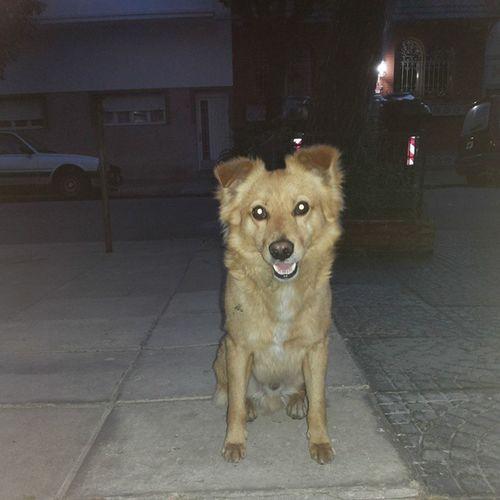 Lobito... mi vecinito Perro Perrito Vecino