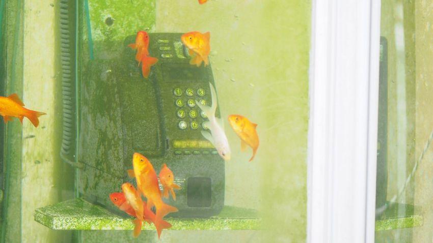 大和郡山 Telephone Box EyeEm Best Shots Talking Photos Enjoying Life きんぎょ Nara,Japan Telephone