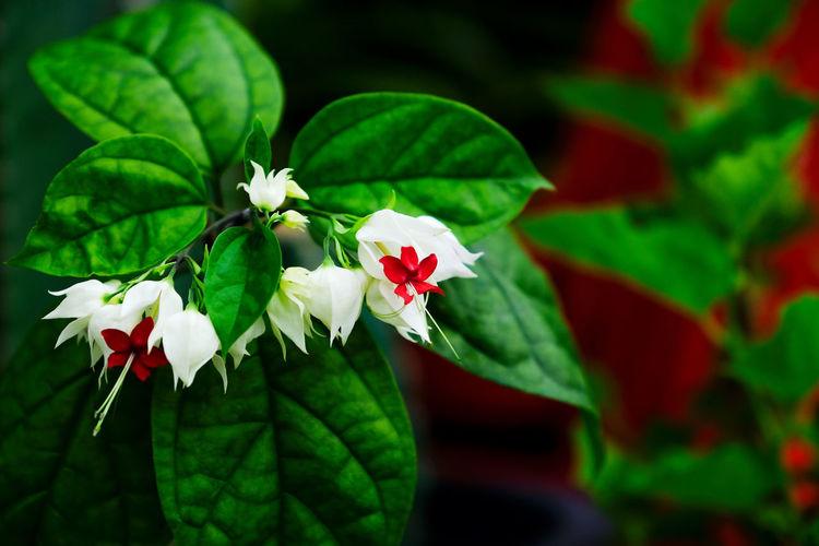 Outdoors Flower