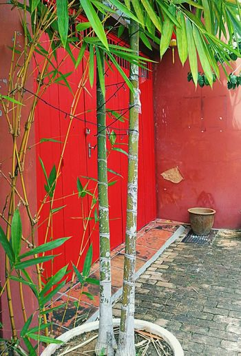 Colors Of Carnival Chinese New Year Chinese Culture Red Bamboo Tree The Red Door Streetphoto_color AMPt - Street NEM Street Street Art Open Edit Showcase: February Old Buildings Old Town Chinese New Year 2016 Chinese Art Chinese New Year Decor AMPt - My Perspective Street Photography From My Point Of View AMPt_community Eye4photography  Colour Of Life
