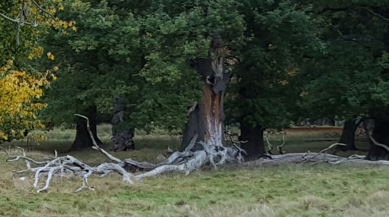 tree, day, no people, outdoors, nature, grass, animal themes, mammal