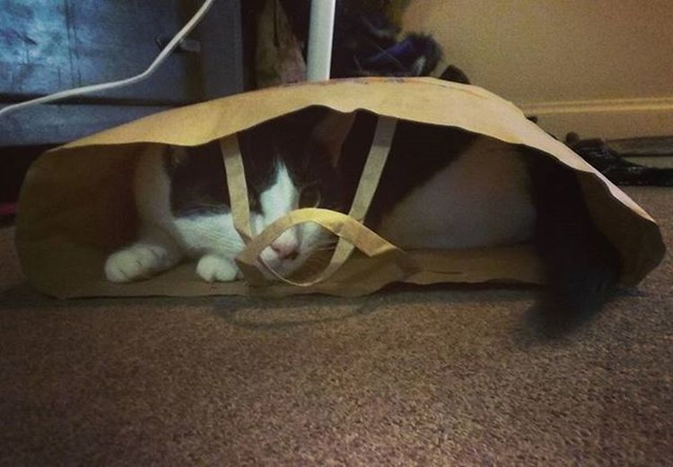 Waffle in a bag 😂 Catinabag Catsofinstagram Meow Playmode