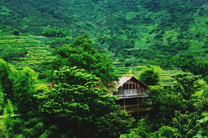 Cabin In The Woods Lonely Village Beautiful Nature Nature Green Chinese Village