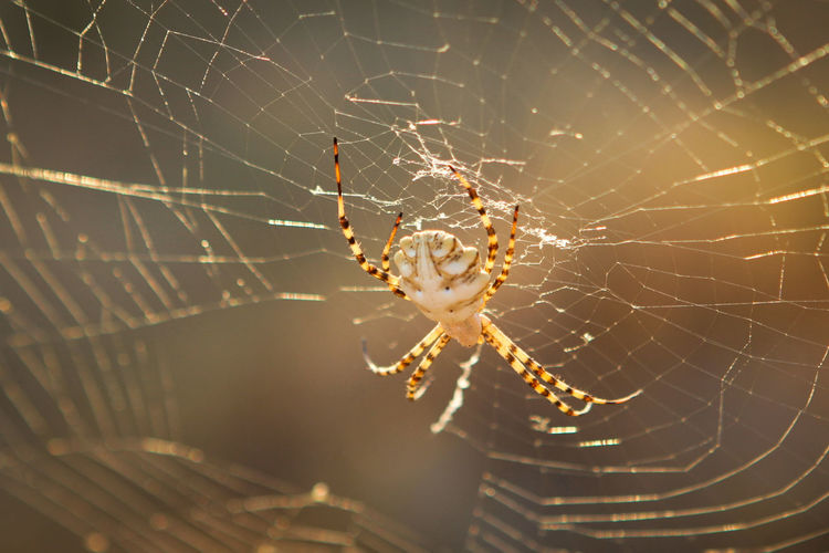 Spider Web Animal Themes Animal Animals In The Wild Spider Arachnid Animal Wildlife Fragility One Animal Insect Arthropod Close-up Vulnerability  Focus On Foreground Survival Web No People Nature Animal Body Part Outdoors Animal Leg Complexity